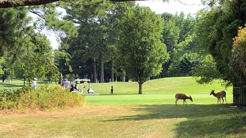Golfer with deer