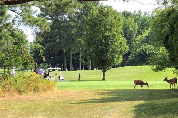 Golfer with deer